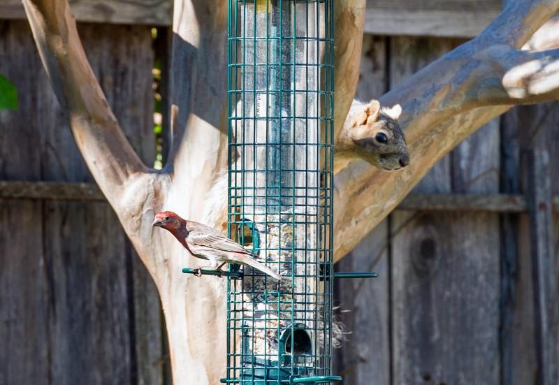 Bird_Squirrel_DSC_4956