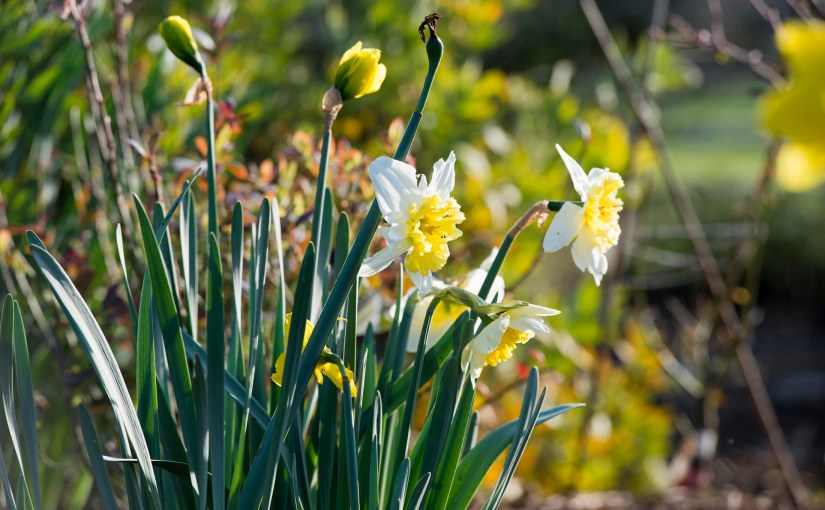 Spring Greeted in theGarden