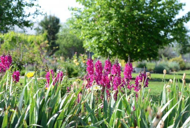 Garden_4_12_14_DSC_0618