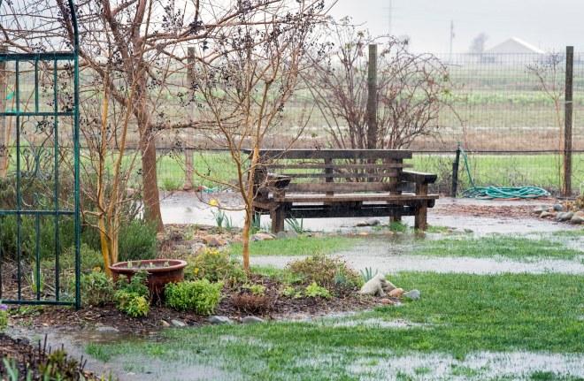 Garden_Feb_Rain_DSC_4371