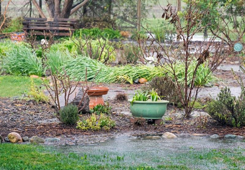 Garden_Feb_Rain_DSC_4372