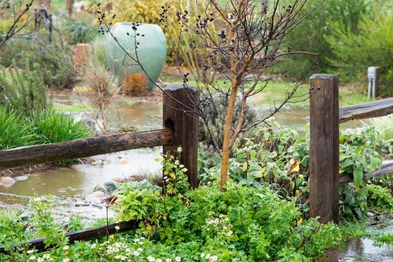Garden_Feb_Rain_DSC_4373