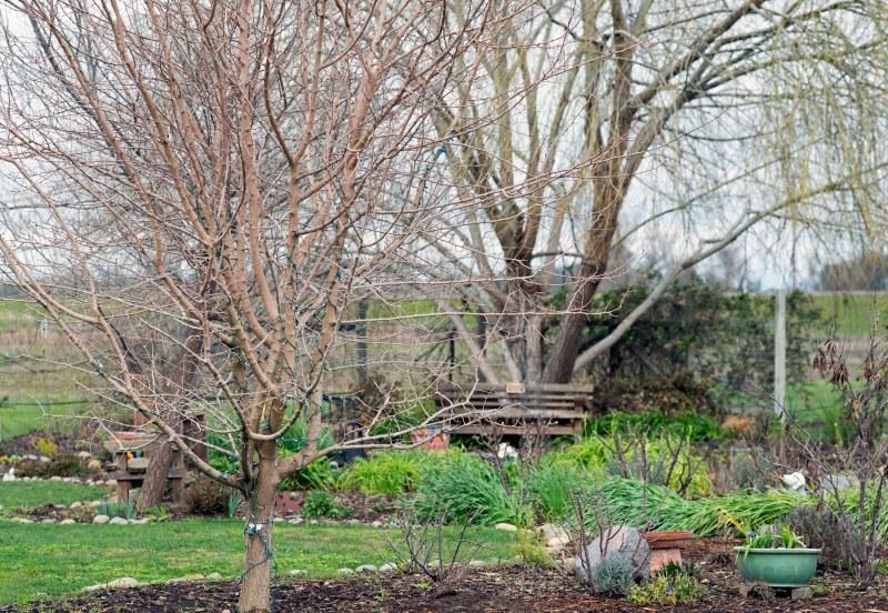 Garden_February_DSC_4340