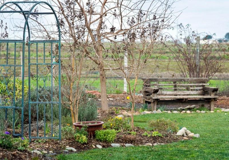 Garden_February_DSC_4342