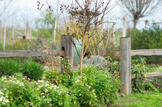 Garden_February_DSC_4343