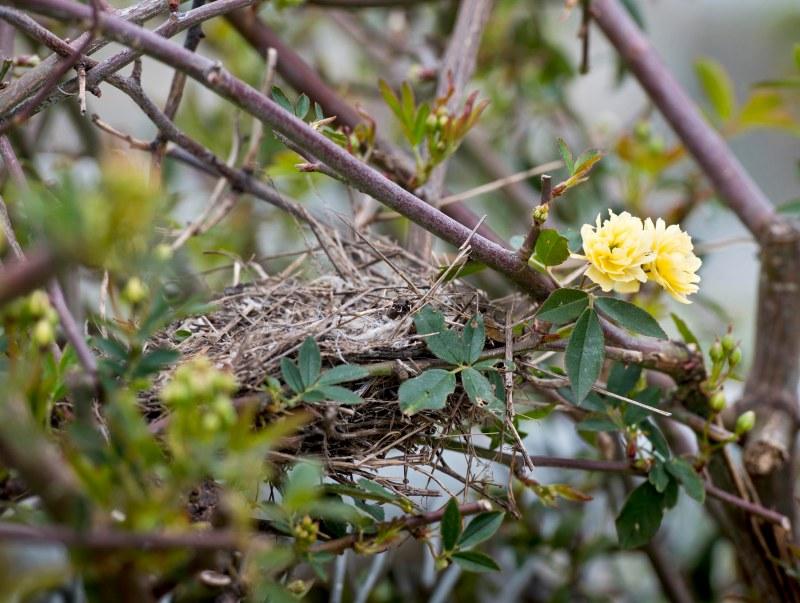 Nest_DSC_5404