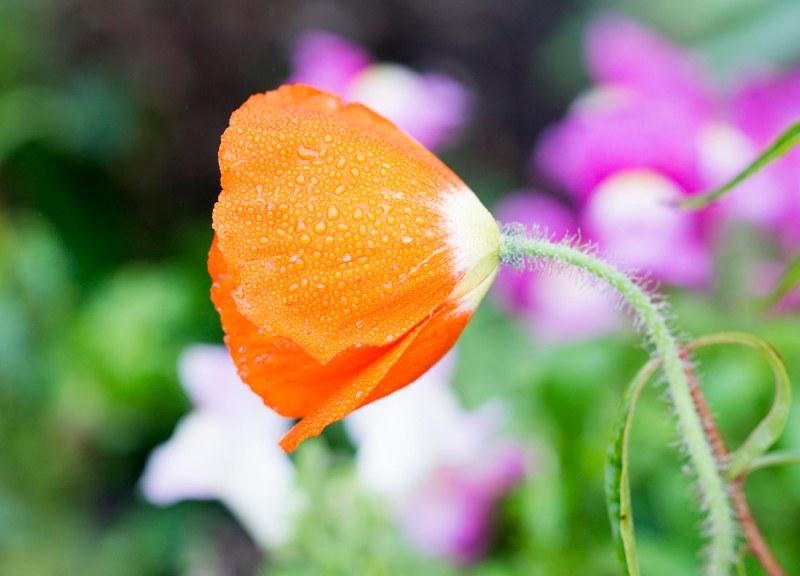 Sending Flowers To Sellars Funeral Home Mt Juliet Tn