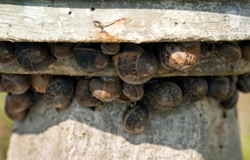 Snails_DSC_4874