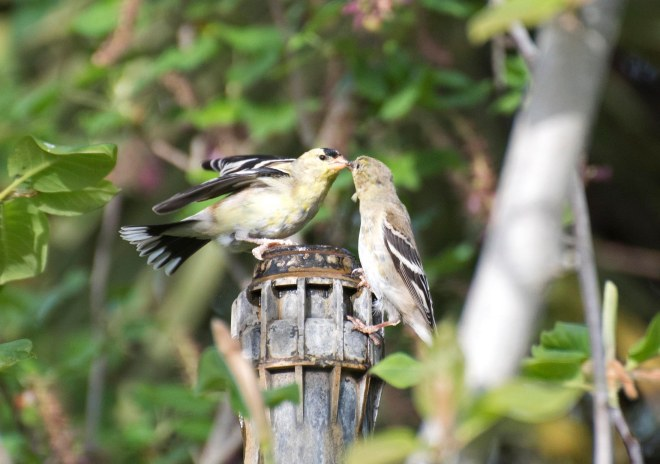 Birds_750_4188