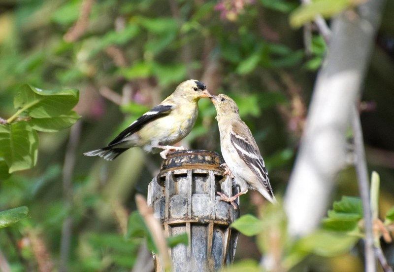 Birds_750_4189