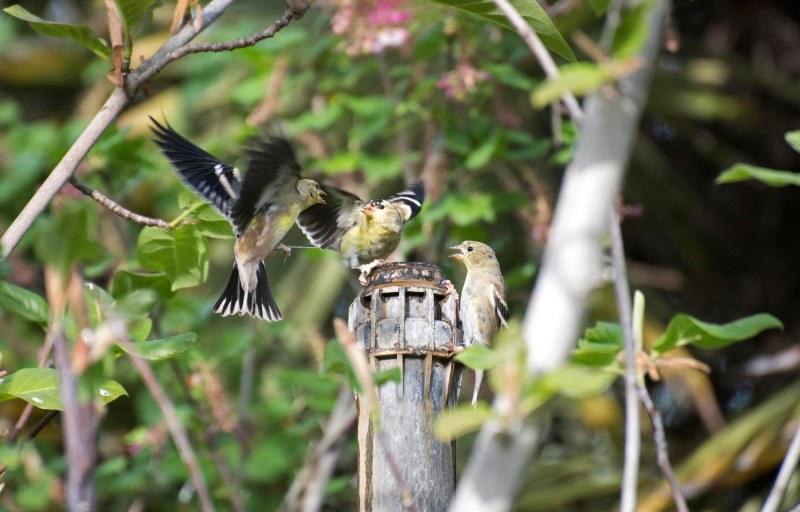 Birds_750_4190