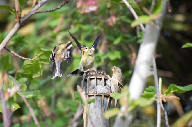 Birds_750_4191