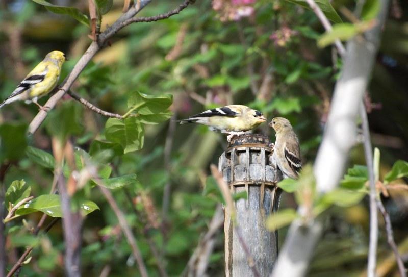 Birds_750_4192