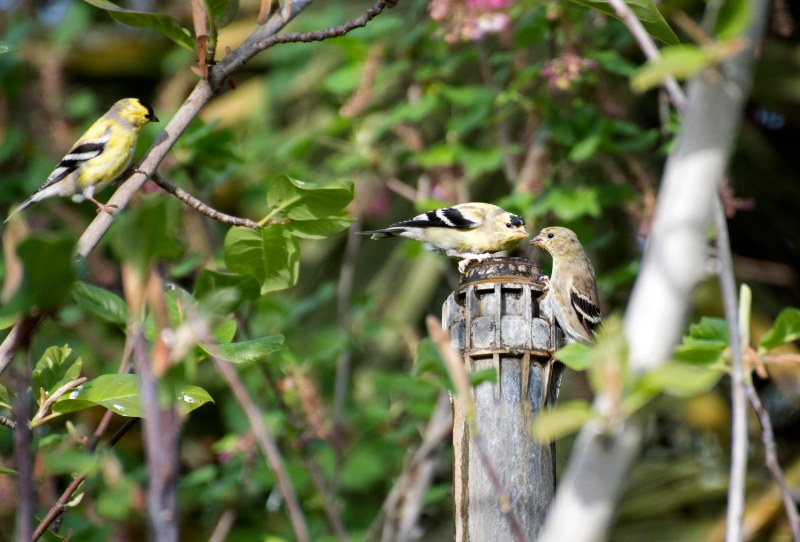 Birds_750_4193