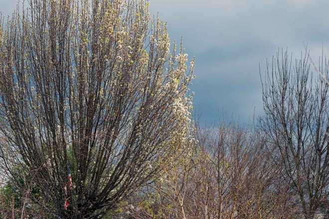Blossoms_Clouds_DSC_5839