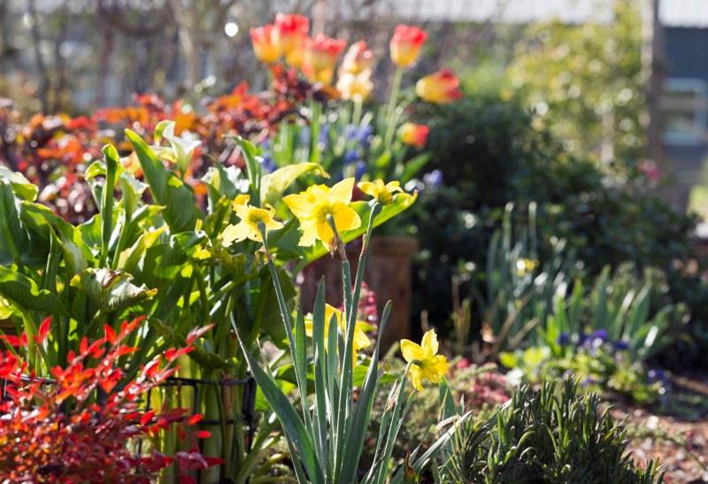 Garden_DSC_6253