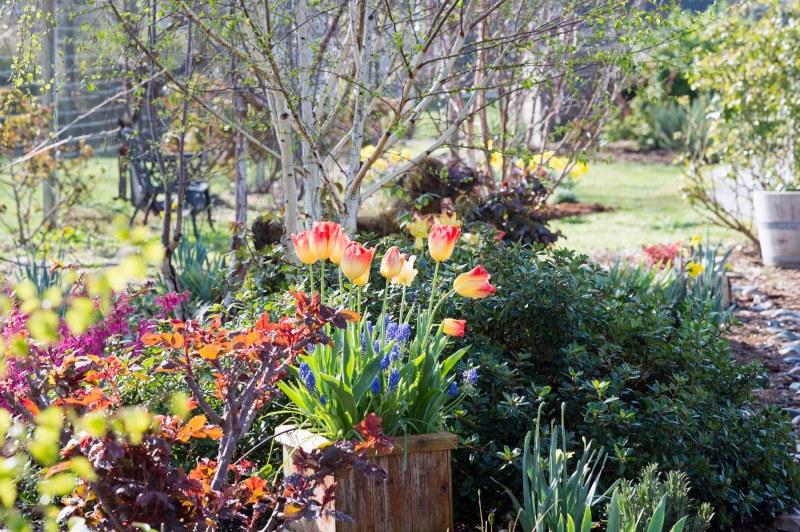 Garden_DSC_6257