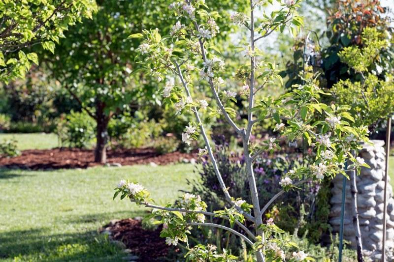 Garden_Spring_750_5067