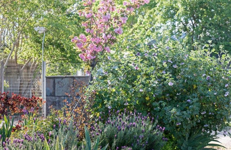 Garden_Spring_750_5068