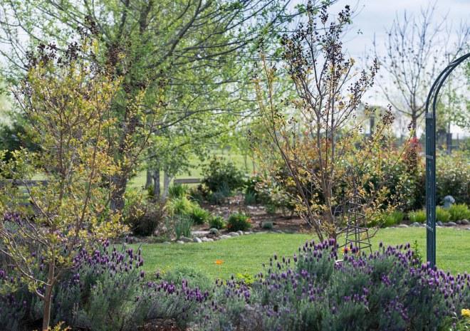 Garden_Spring_DSC_7067