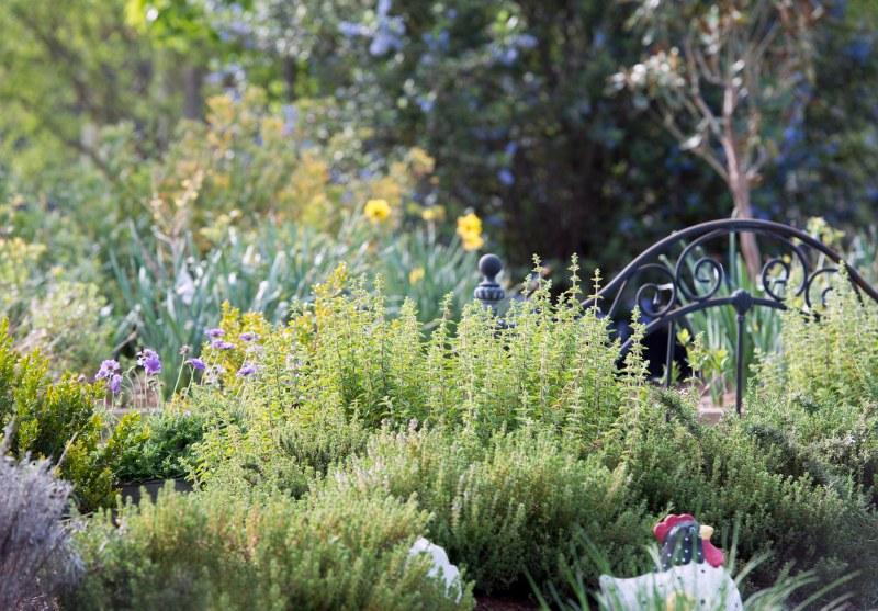 Garden_Spring_DSC_7070