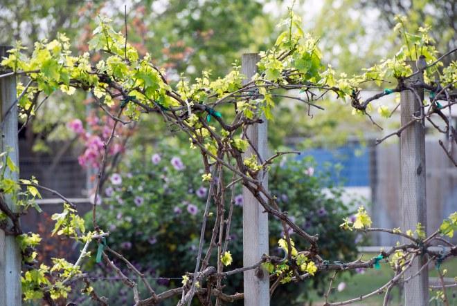 Garden_Spring_DSC_7071