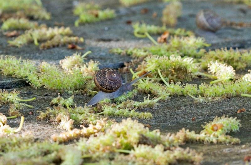 Snail_DSC_6982