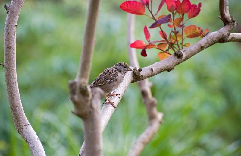 Sparrow_750_4119
