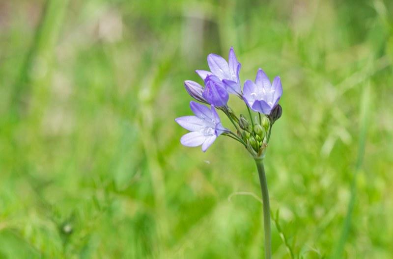 Wildflower_DSC_6391