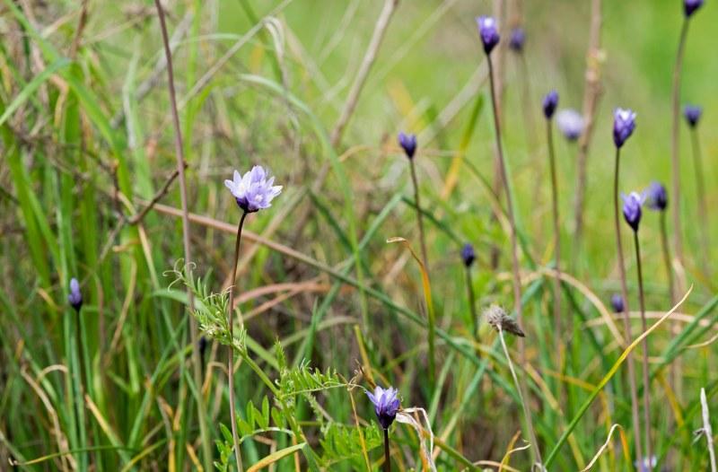 Wildflower_DSC_6397