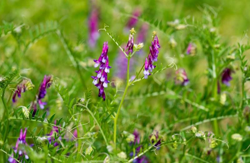 Wildflowers_DSC_6402