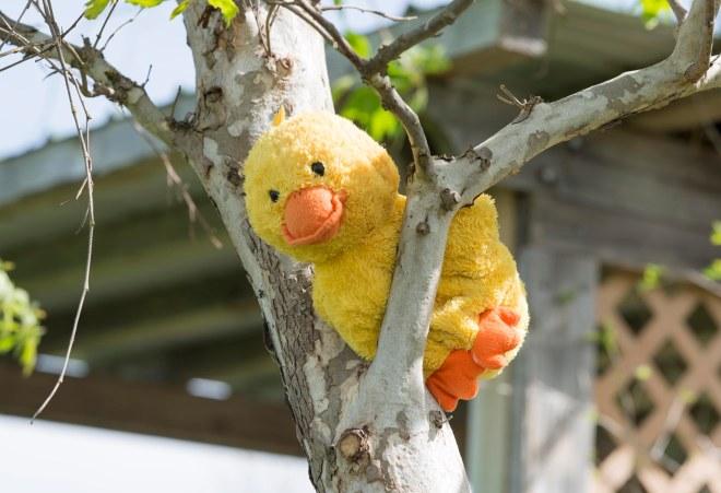 Yellow Duck_DSC_6846