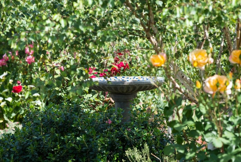 Bird Bath_DSC_8036