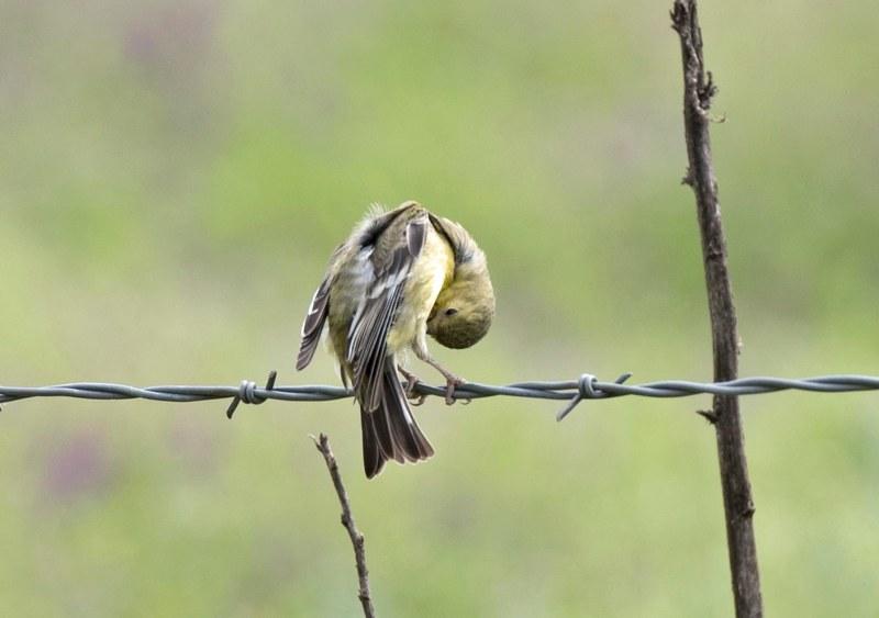 Bird_Wire_750_5378