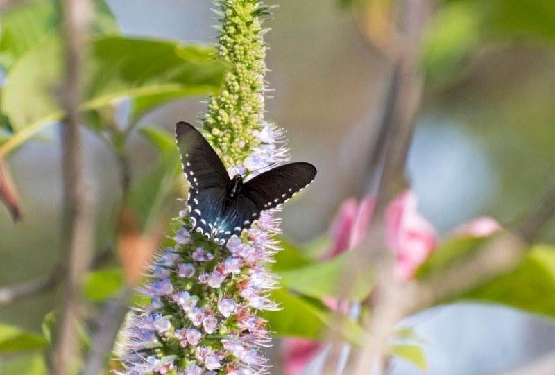 Butterfly_750_4139