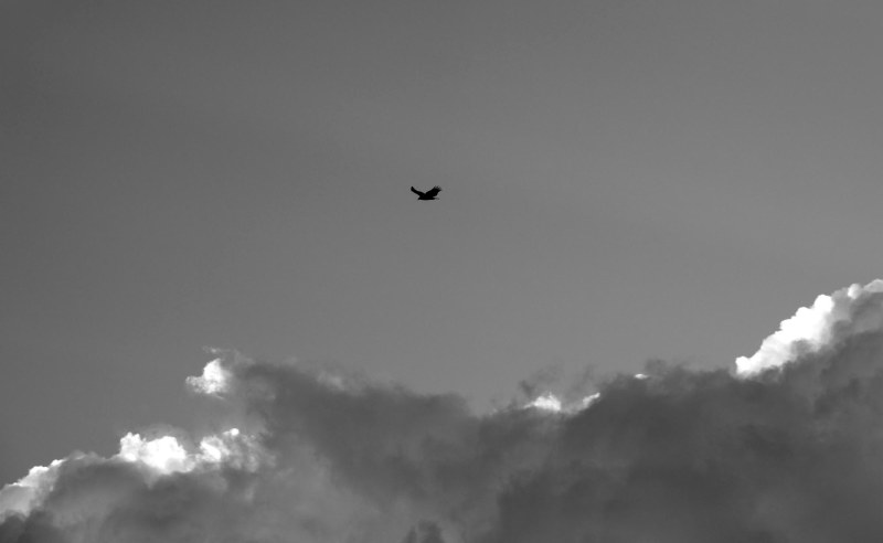 Clouds_Hawk_DSC_5775