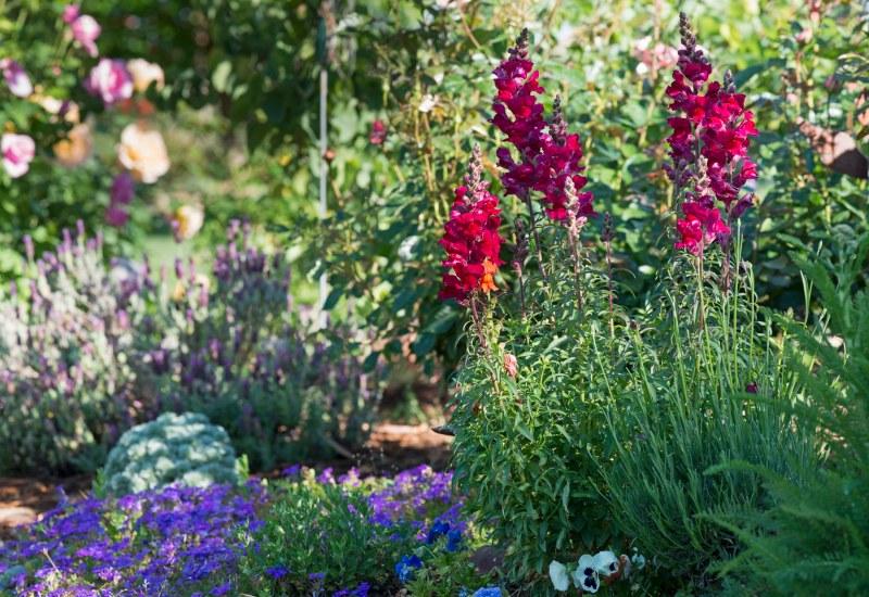 Garden_April_DSC_8099