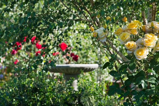 Garden_April_DSC_8100