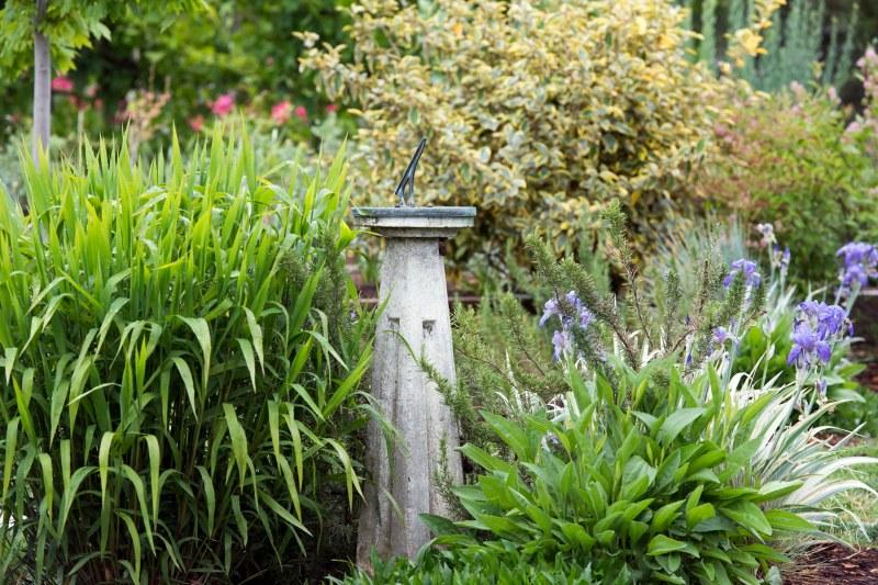 Garden_Drift_DSC_8387
