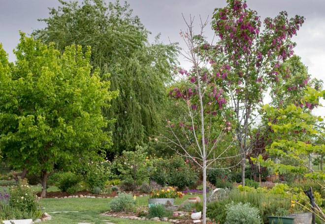 Garden_Rain_DSC_7845
