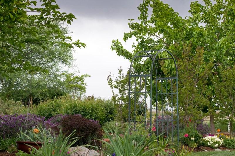 Garden_Rain_DSC_7847