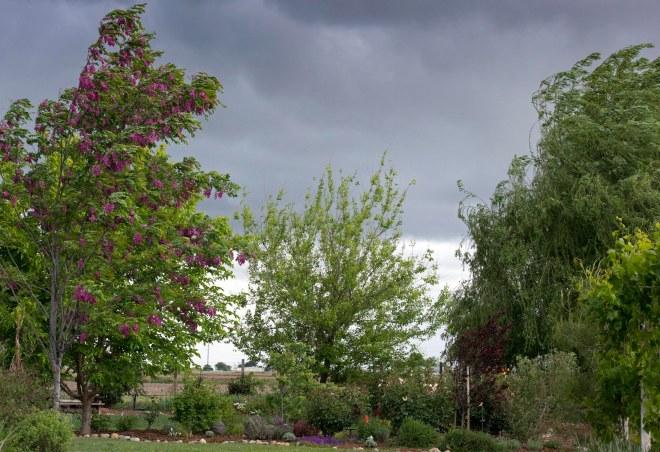 Garden_rain_DSC_7889