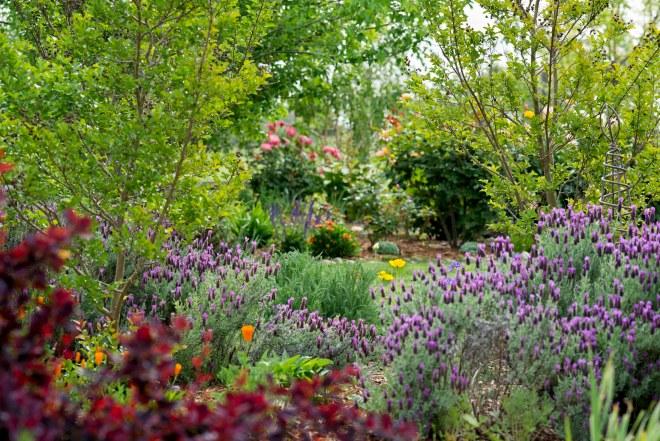 Garden_Spring_DSC_7985