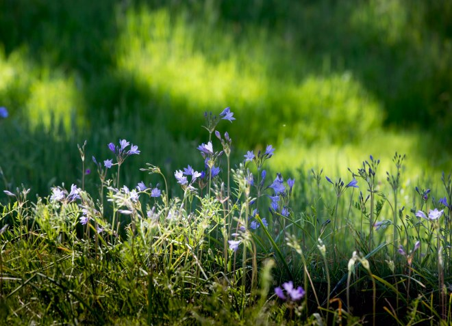 Meadow_DSC_7199