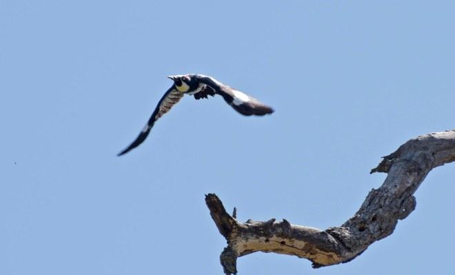 Woodpecker_750_5881