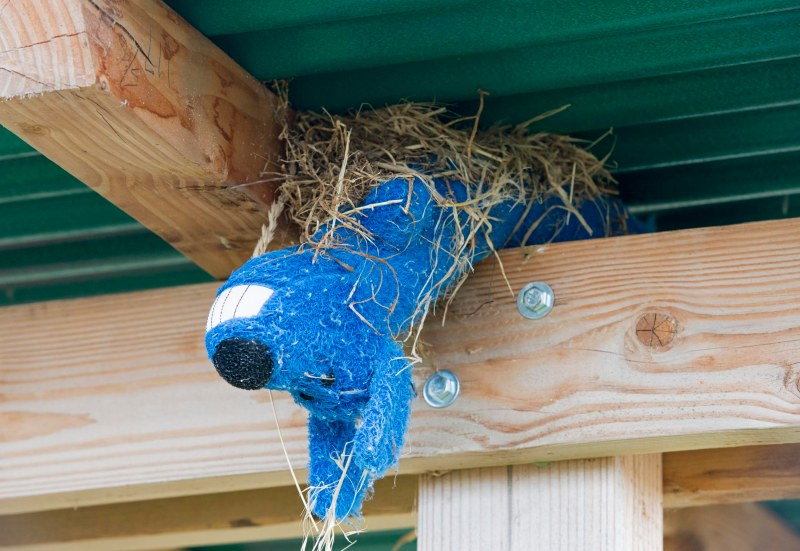 Bird Nest_DSC_0653