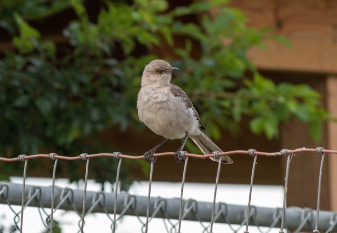 Bird_DSC_0603