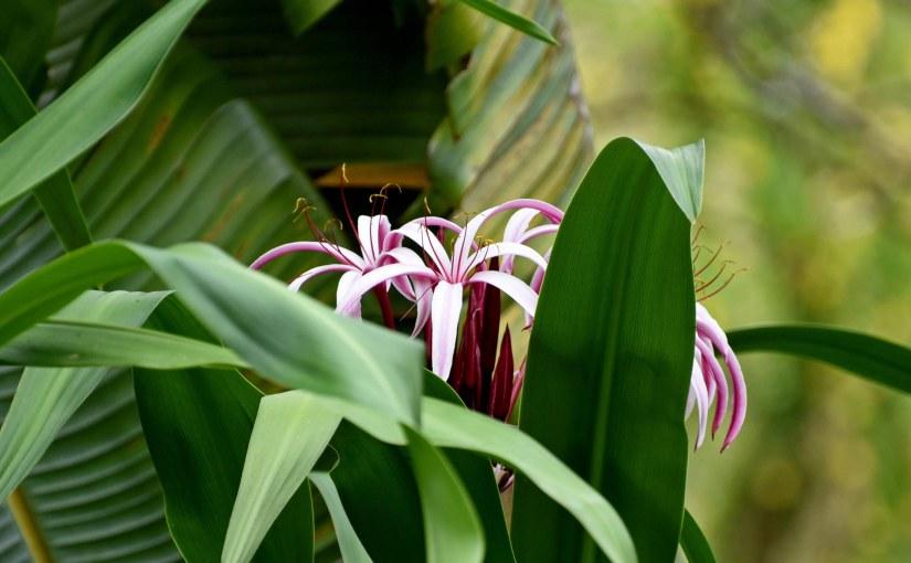 Allerton Garden: Kauai