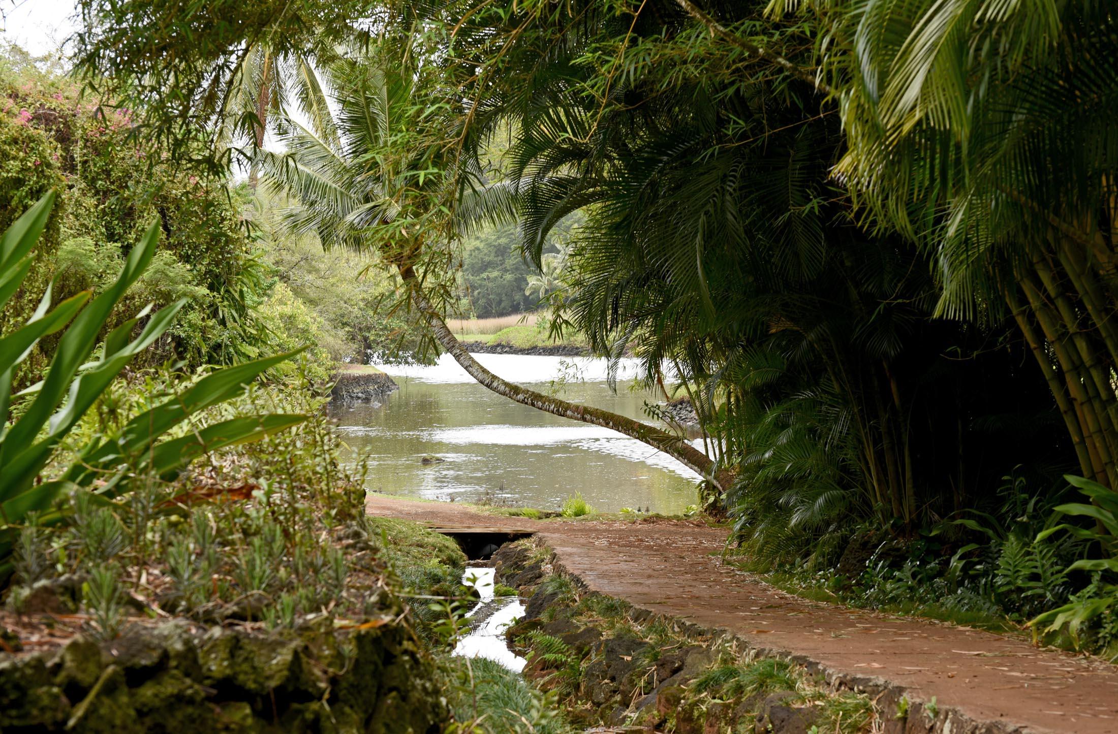Allerton Garden Kauai Gardens For Goldens