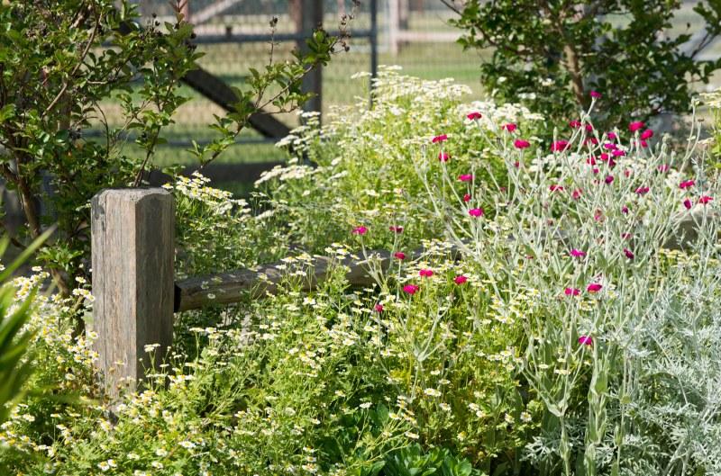CA_Cottage_Garden_DSC_9823